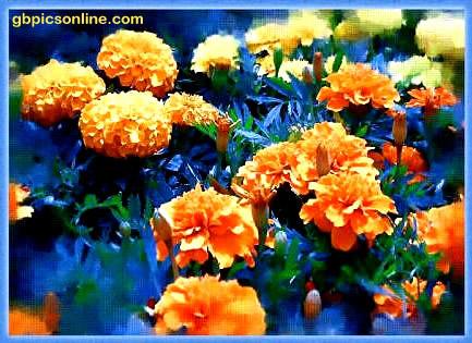 Sommerfarbene Blumen in blauem...