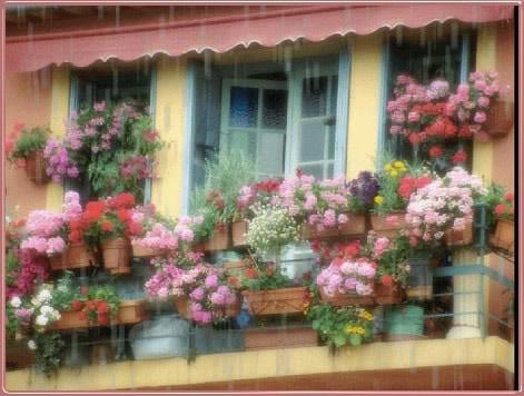 Florist im Regen