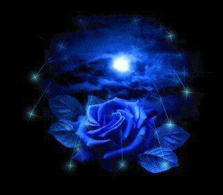 Blaue Rose empfängt den...