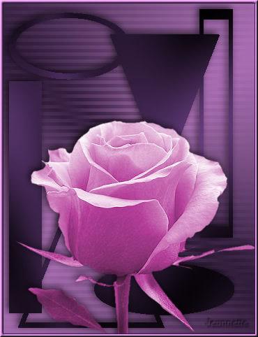 Pinke Neonrose