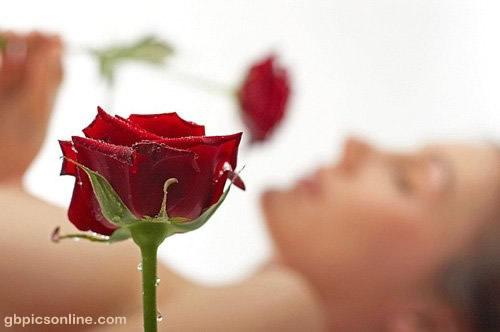 Die Rosenliebhaberin