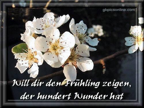 Will dir den Frühling...