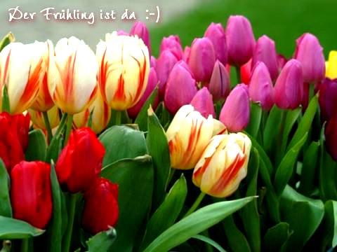 Der Frühling ist da :-)