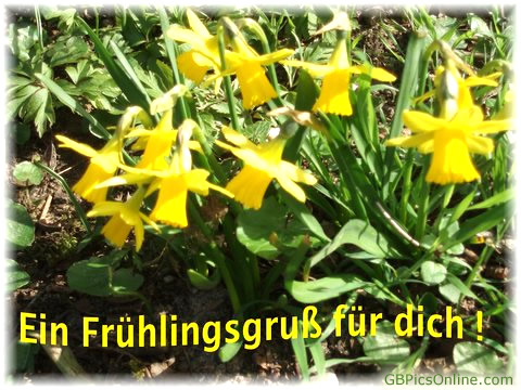 Ein Frühlingsgruß für dich!