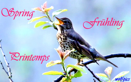 Spring. Frühling. Printemps.