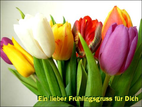 Ein lieber Frühlingsgruß für Dich.