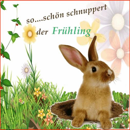 Frühling bild 2