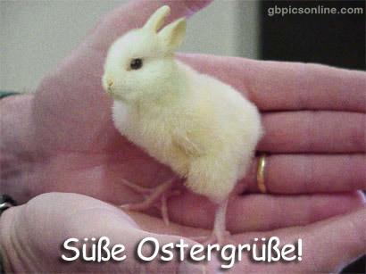 Lustiges zu Ostern bild 14