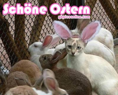 Lustiges zu Ostern bild 20