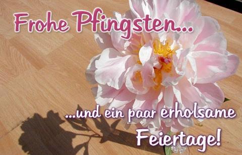 Frohe Pfingsten... und ein...