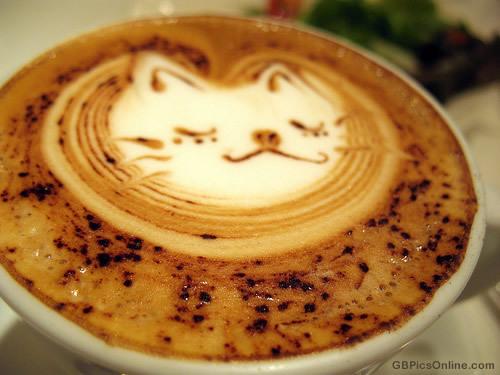 Katzenkaffee