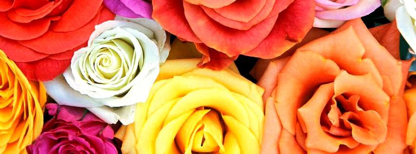 Rosen in allen erdenklichen Farben