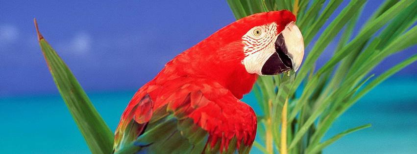 Roter Papagei vor tropischem Hintergrund