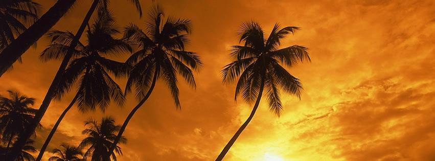 Palmen im Schatten des Sonnenuntergangs
