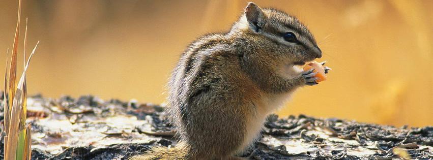 Eichhörnchen genehmigt sich einen Snack