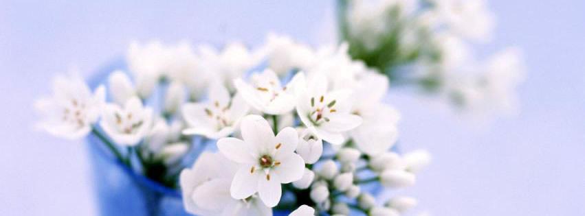 Zierliche weiße Blümchen