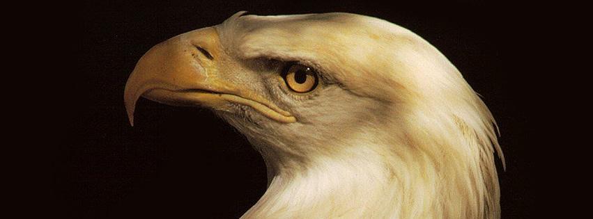 Haupt eines Adlers