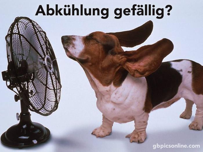 Abkühlung gefällig?