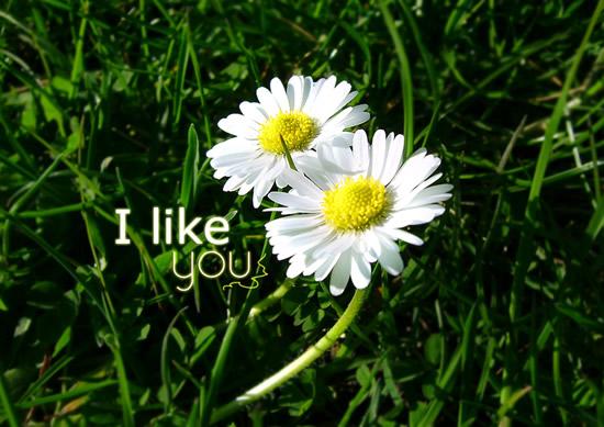 I Like You bild 8