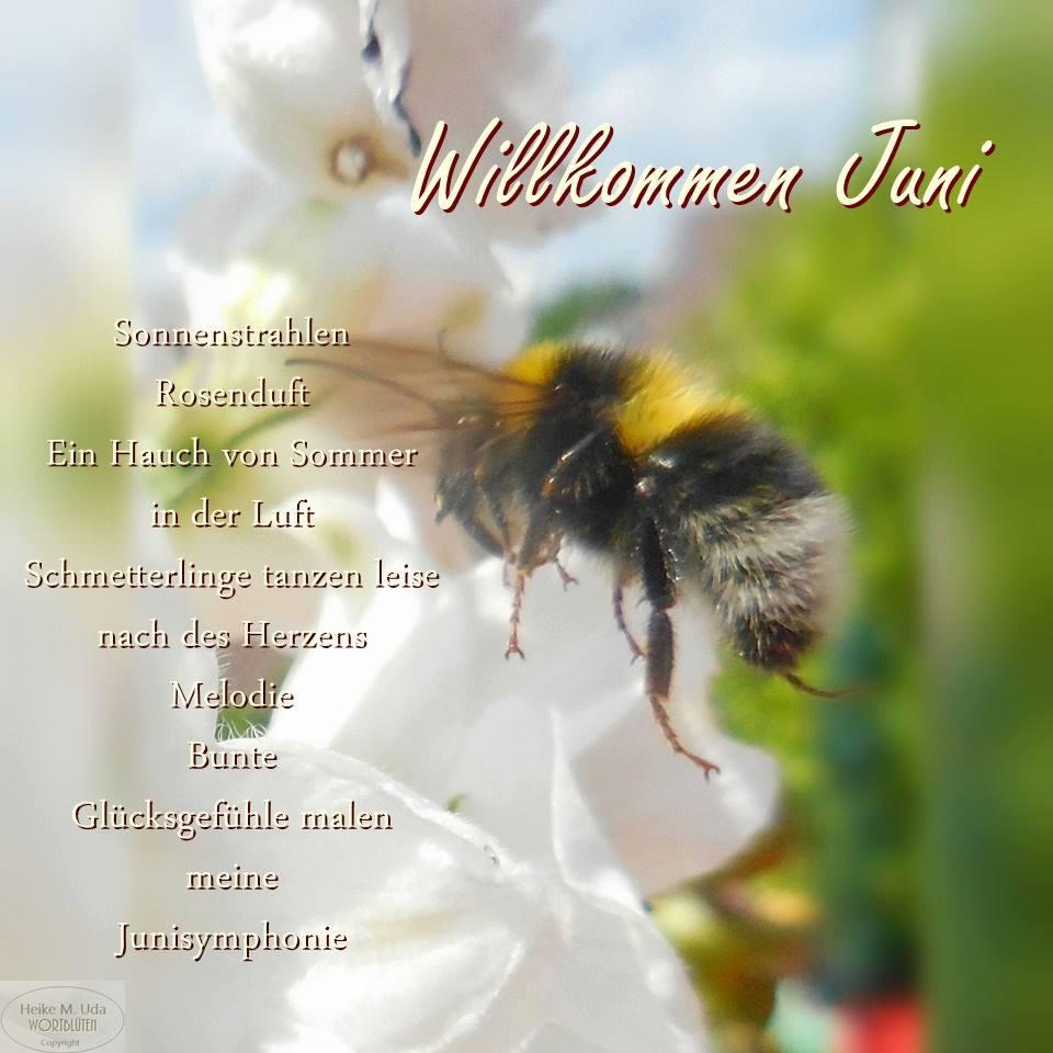 Willkommen Juni. Sonnenstrahlen, Rosenduft, Ein Hauch von Sommer in der Luft. Schmetterlinge tanzen leise nach des Herzens...