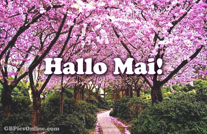 Hallo Mai!