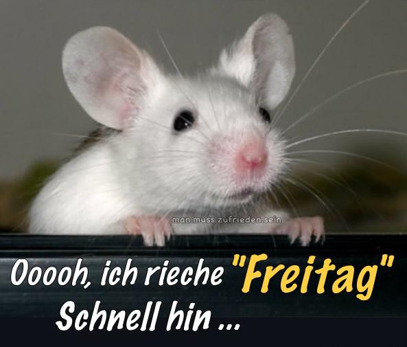"""Ooooh, ich rieche """"Freitag"""" schnell hin..."""