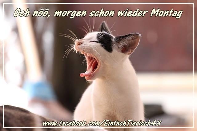 Morgen ist Montag bild 9