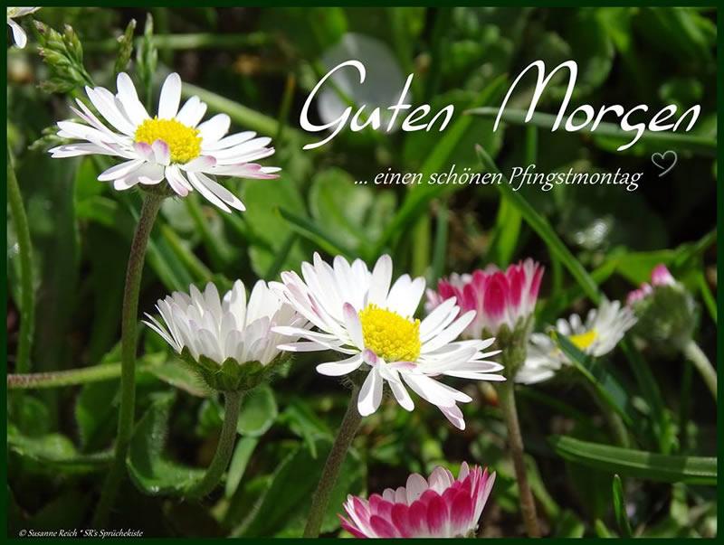 Guten Morgen ...einen schönen Pfingstmontag